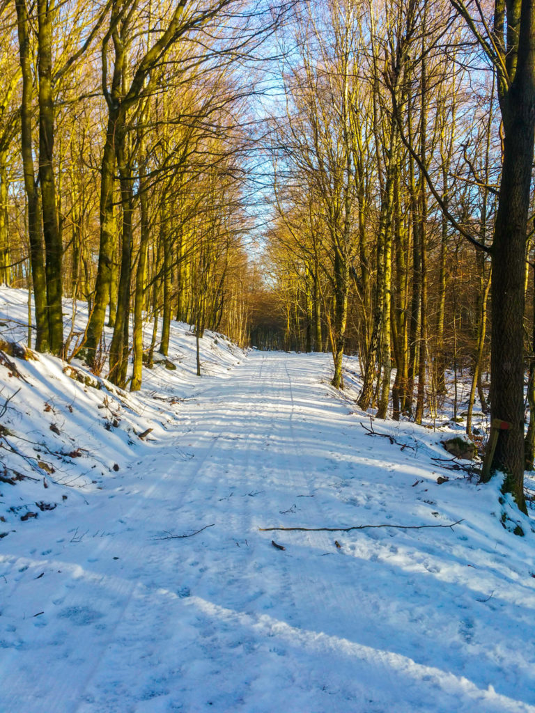 Winter Hike in Söderåsen National Park