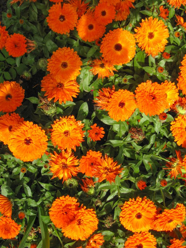 Kashmir flower Garden